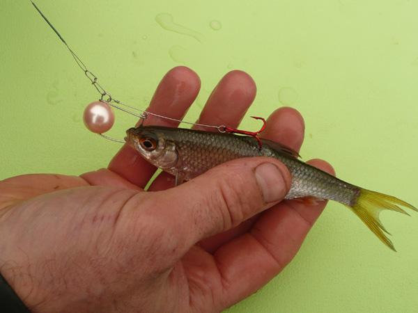 Télécharger le jeu la chasse et la pêche 2014 sur le Russe